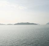 悠々自適な離島暮らしが…人口300人の島を二分する水牛問題